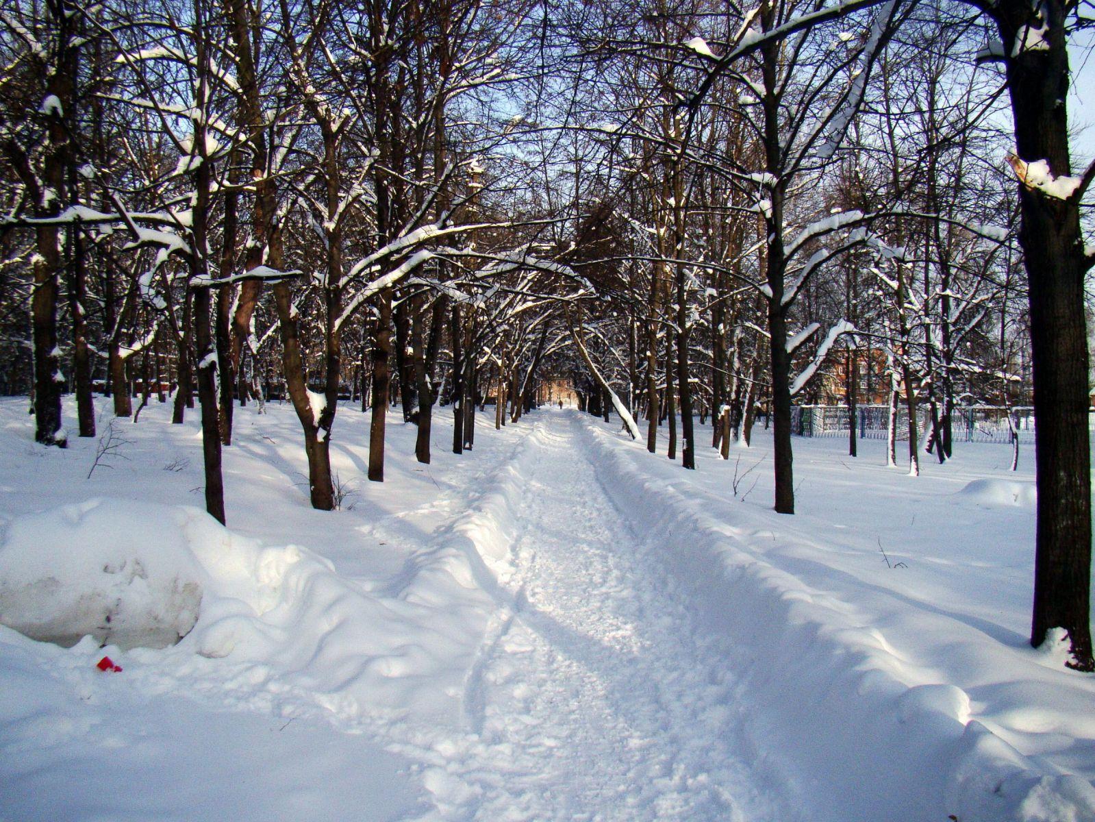 Парк Шевченка зимой